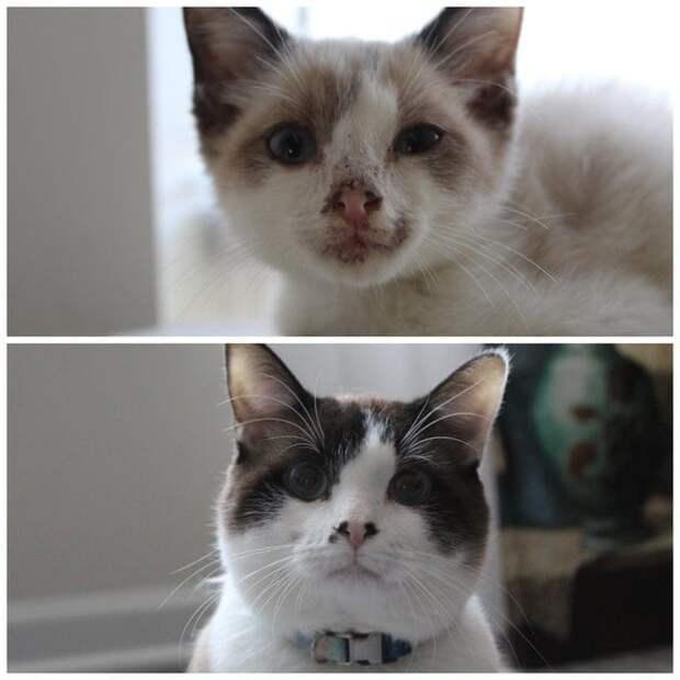 11 котеек, которые, после того как попали в хорошие руки, изменились в лучшую сторону