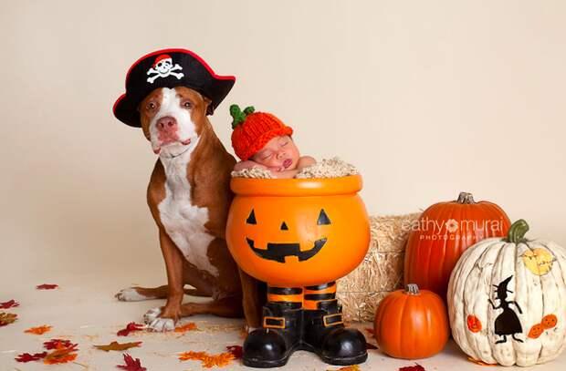 младенцы и собаки первая фотосессия (19)