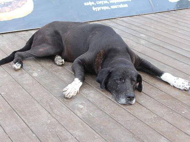 В Симферополе появился собственный пес Хатико