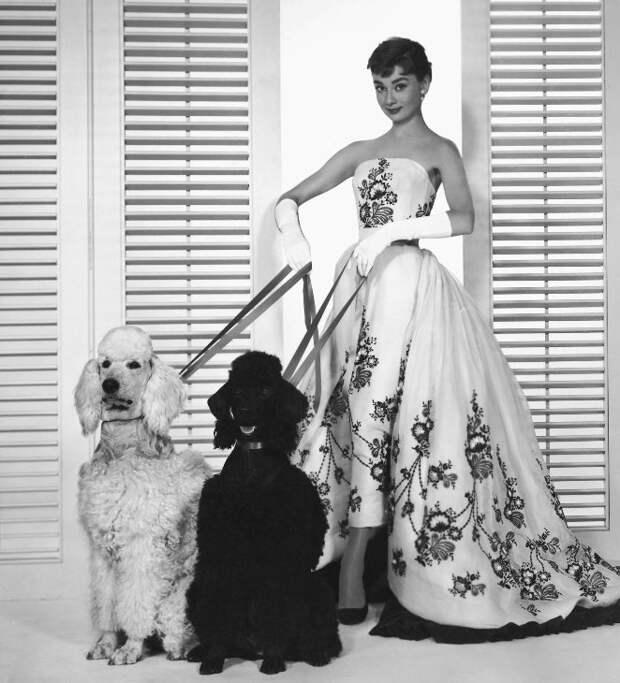 Одри Хепберн и животные: собаки/ Audrey Hepburn and animals: dogs. Photo