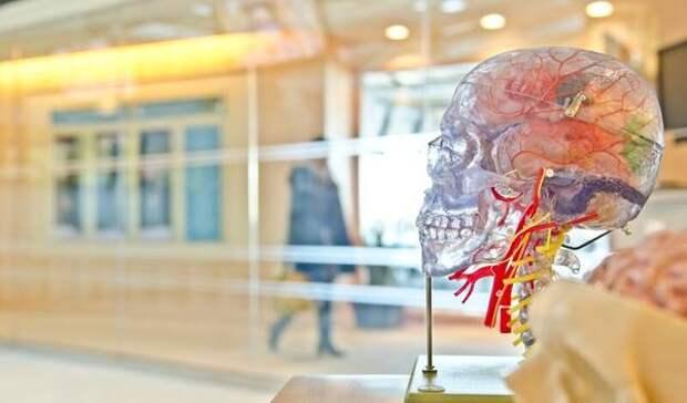 Искусственного интеллекта не будет, потому что мозг – это не компьютер