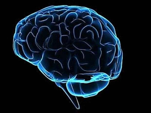 """Сидячий образ жизни провоцирует """"усыхание"""" мозга"""