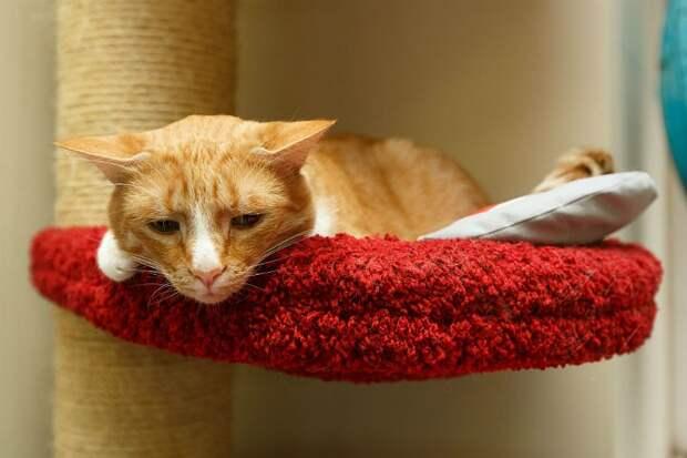 Изгнанный из Эрмитажа кот-фотомодель Гоген нашел нового хозяина