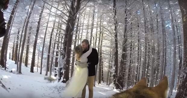 Пара доверила своей собаке снимать их свадьбу, и получилось самое красивое свадебное видео