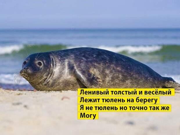 Приколы на Relax.ru от 24 сентября