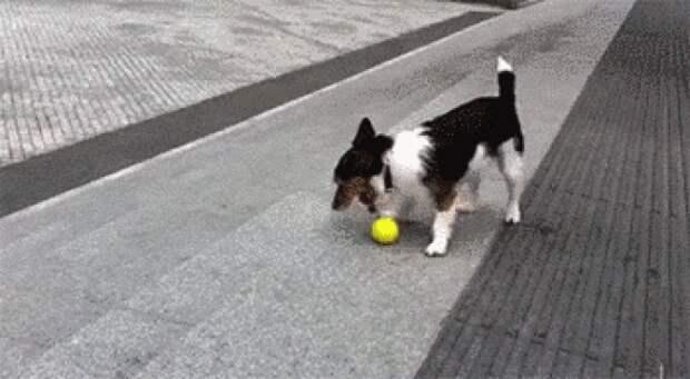 25 причин завести себе собаку