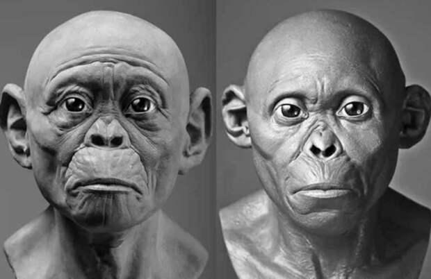 Изображения ископаемых предков человека гоминидов оказались неправильными