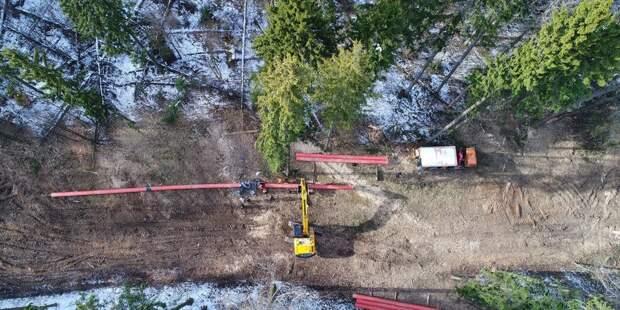На Щукинском полуострове высадят более 800 деревьев — МОСГАЗ