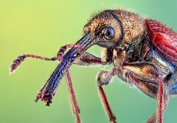 insects08 Портреты насекомых