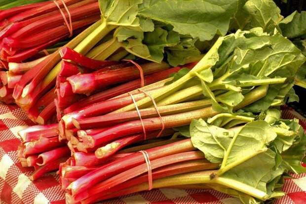 Ревень - полезные и вкусные рецепты