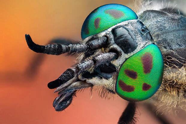 Макросъемка насекомых и пауков от Джона Халлмена. Обсуждение на LiveInternet - Российский Сервис Онлайн-Дневников