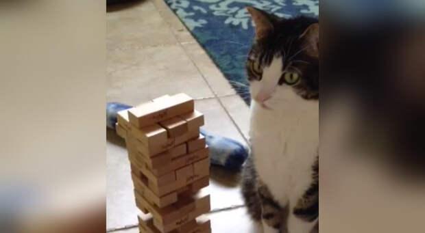 Кот, который играет в «Дженгу» лучше Вас