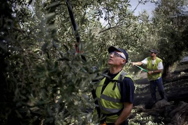 Сезонные рабочие в Европе