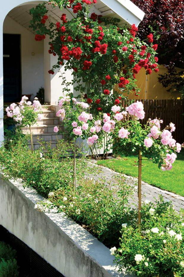 4497432_rosesingardeninspiration35 (450x675, 180Kb)
