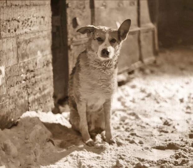 15 фактов о фильме «Собачье сердце», которые раскрывают участников картины с новой стороны