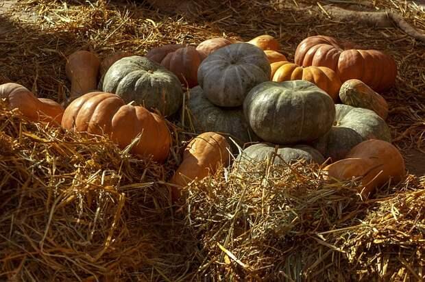 Лунный календарь на 24 сентября: что нужно сделать в огороде