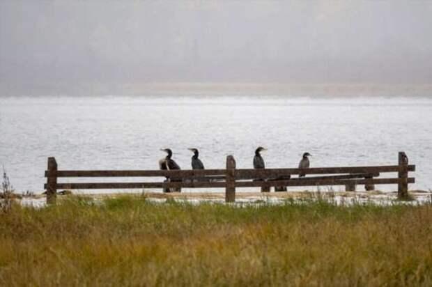 Рябчики на Байкале (16 фото)