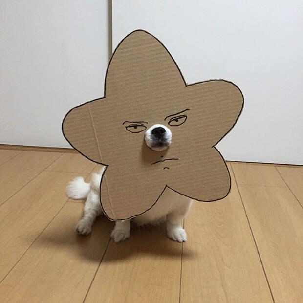 Японка прославила свою собаку