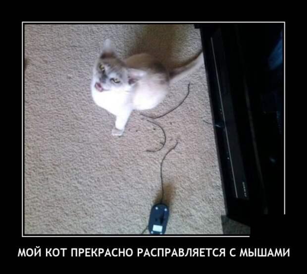 Демотиватор про кота и мышей