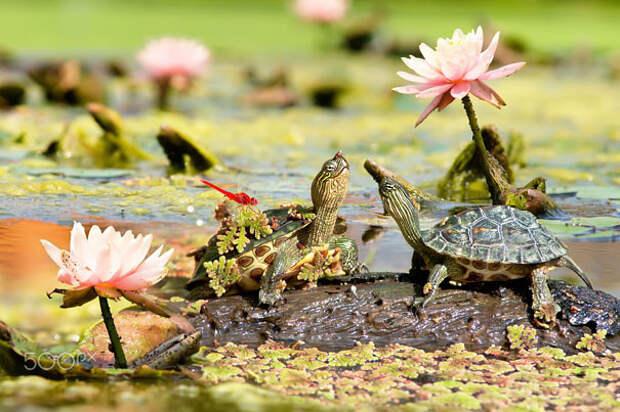 13. Встреча ниндзя, питомцы, черепахи