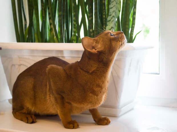 Пятничный кот Джони: помоги ему прожить дольше!