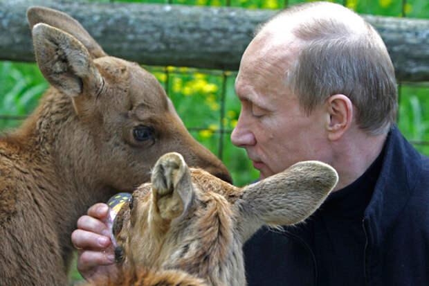 Жизнь после Путина.  Что стало с «президентскими» тиграми, стерхами, леопардами и китами