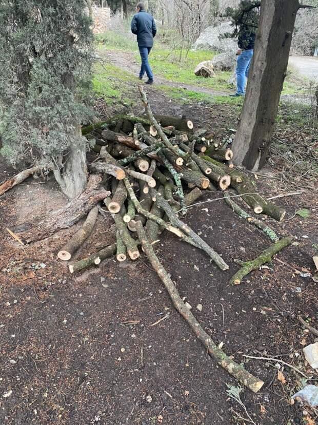 На ЮБК в одном из посёлков вырубили краснокнижные деревья