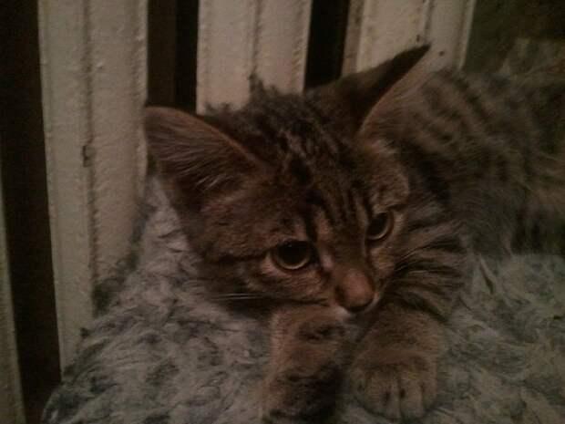 Ровно три года назад, в нашем доме появилась маленькое чудо по имени Герда