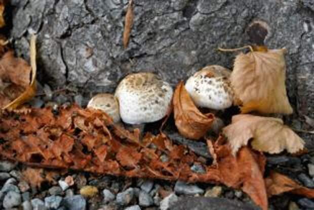 Осторожно, грибы. Как не отравиться первыми дарами леса