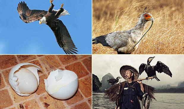 Интересные факты о птицах + Видео
