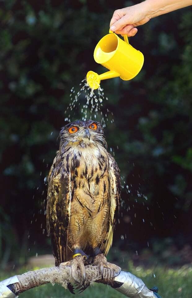 Марш в душ!