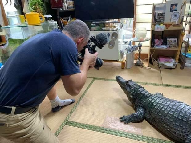 В японской семье уже 40 лет живет крокодил