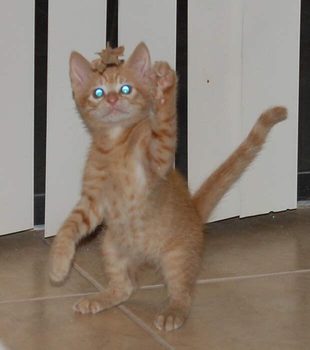14.  кот, поза