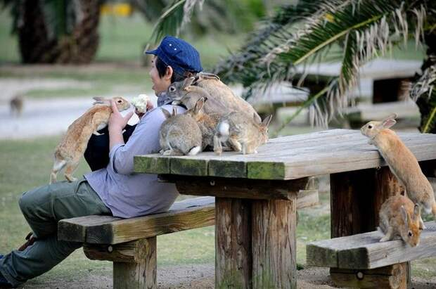 Японский остров Окуносима - рай для кроликов