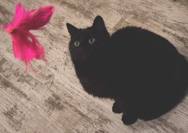 В поисках дома исключительно добрая, загадочная и грациозная кошечка!