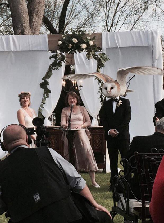 40. Женщина выходит замуж за сову момент, фотография