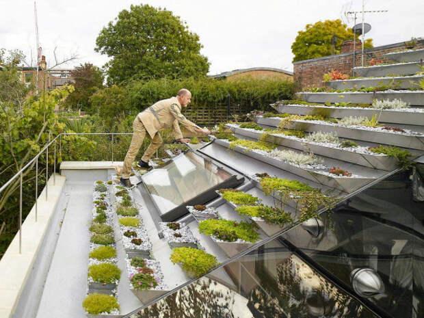 Крыши Петербурга планируют превратить в огороды
