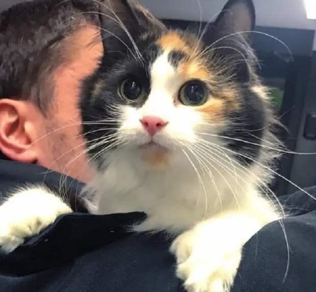 Робкая кошка пряталась за машиной. Никто не знал, что у неё будут котята, и без помощи человека им придётся жить на улице