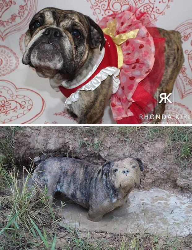 30 фотографий, доказывающих идеальную совместимость собак и грязных луж