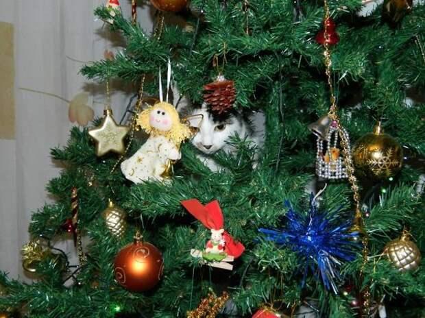 43. Освоение елки елка, кошка, подборка