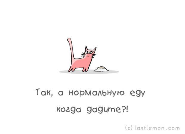 catsaask06