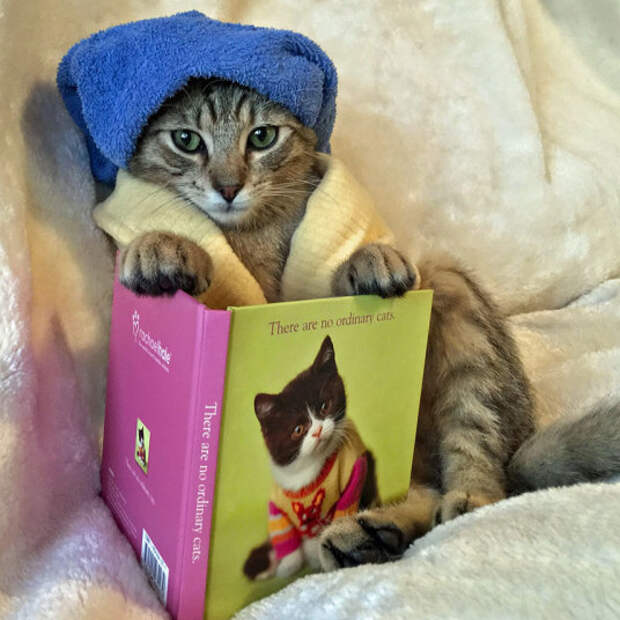 Коты почти как люди