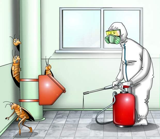 В домах ЮВАО после объявлений о дезинсекции завелись тараканы