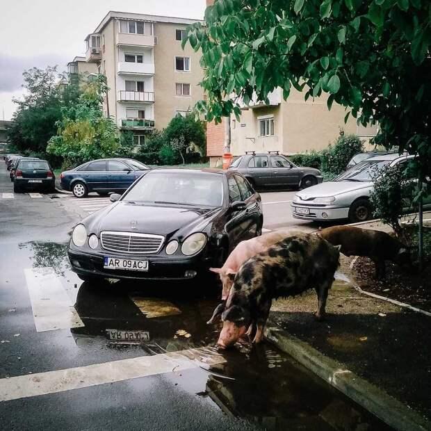 Фотографии, что показывают всю красоту и печаль Румынии