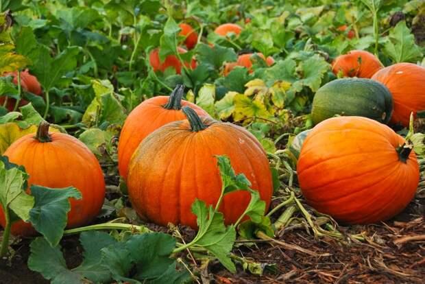 Время собирать урожай: самые полезные сезонные овощи и фрукты