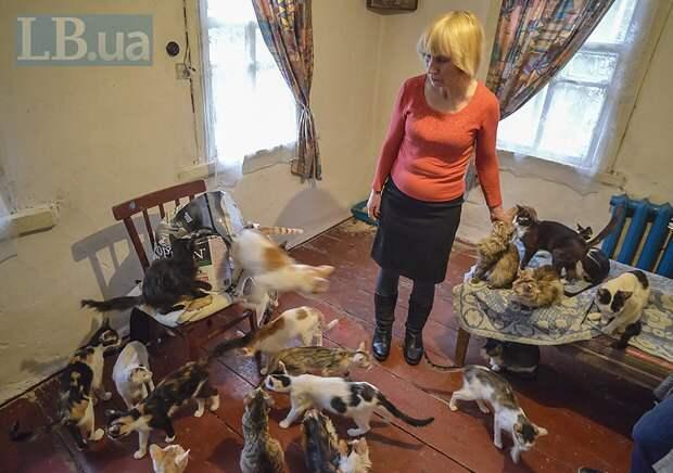 В Антраците кошки занимали две комнаты трехкомнатной квартиры