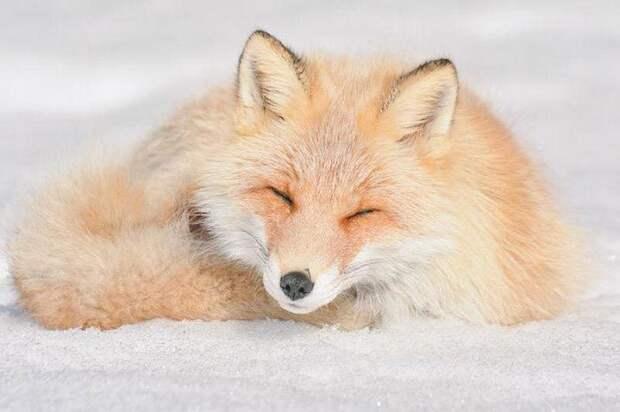 Hokkaido  cute animals, Хоккайдо милые животные