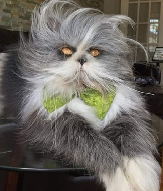 Растрепанный кот