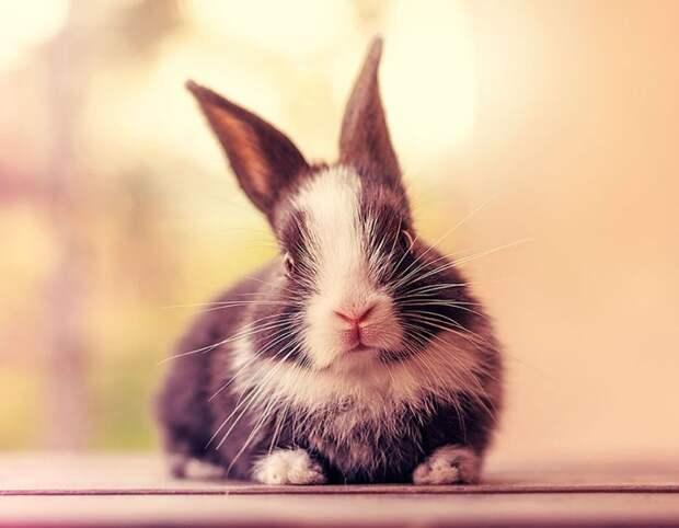 Первые 30 дней из жизни крольчонка
