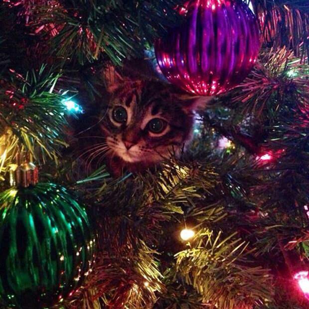 4. Это любовь с первого взгляда  елка, кошка, подборка